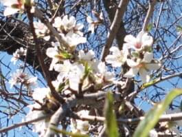 Frühling bereits ab Januar: Auf Mallorca möglich