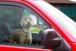 Hunde bei Hitze im Auto