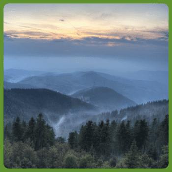 Grüne Straße im Schwarzwald