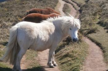 Tierische Begegnungen in Cornwall