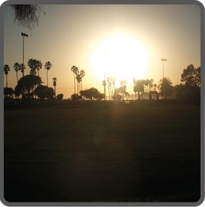 Sonne und Palmen