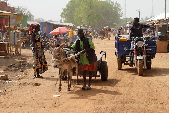 Water4Afrika Tiere in Afrika