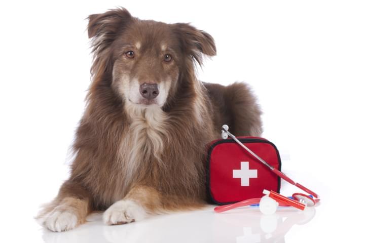 Reiseapotheke im Auto für den Hund