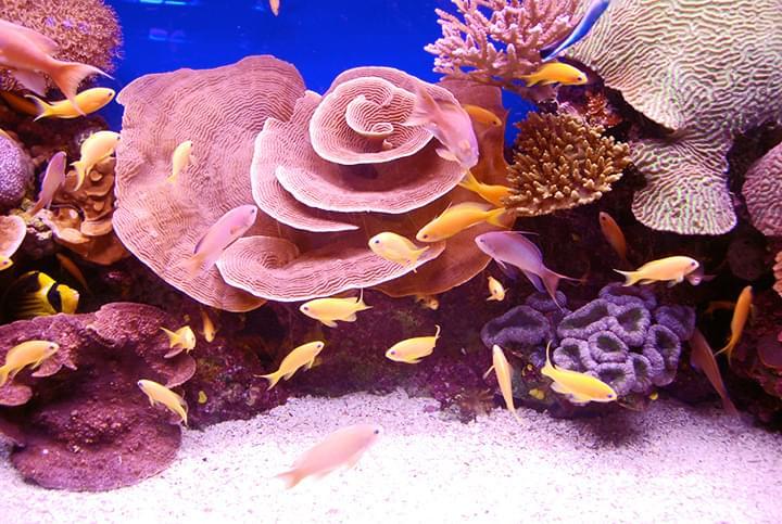 Im Roten Meer
