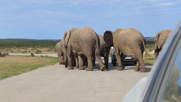 Das ursprüngliche Elefantenrennen