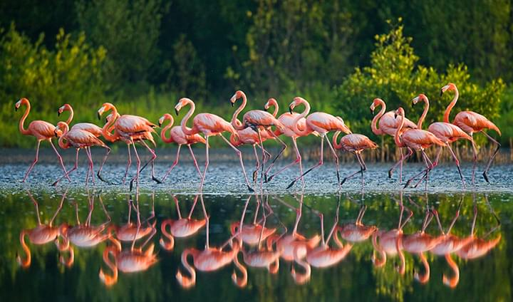 Flamingos im Nationalpark in Kuba