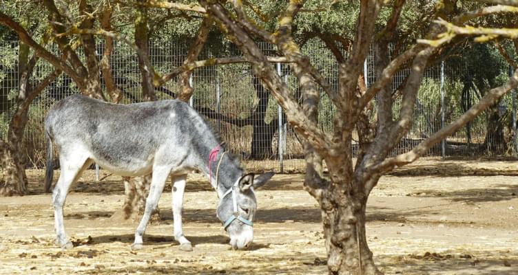 Ausflugstipp Kreta: Das Altersheim für Esel besuchen