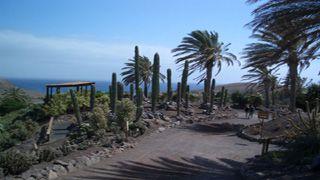 Jardin Botanico de Cactus